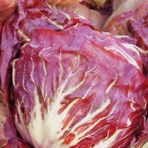 Organic Chicory. Palla Rossa.