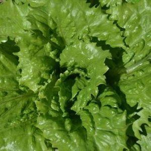 Lettuce: Crisphead