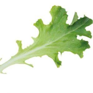 Lettuce: Baby-Leaf