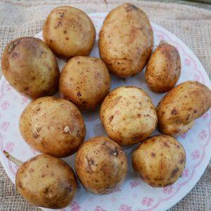 Colleen. Organic potato.