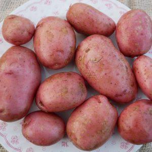 Sarpo Mira Organic potato.