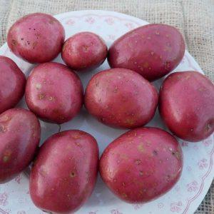 Organic seed potatoes - Setanta