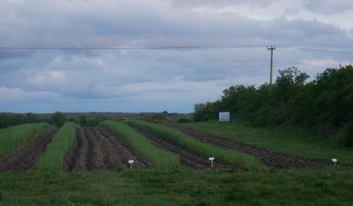 Planting at Kilclief 2021